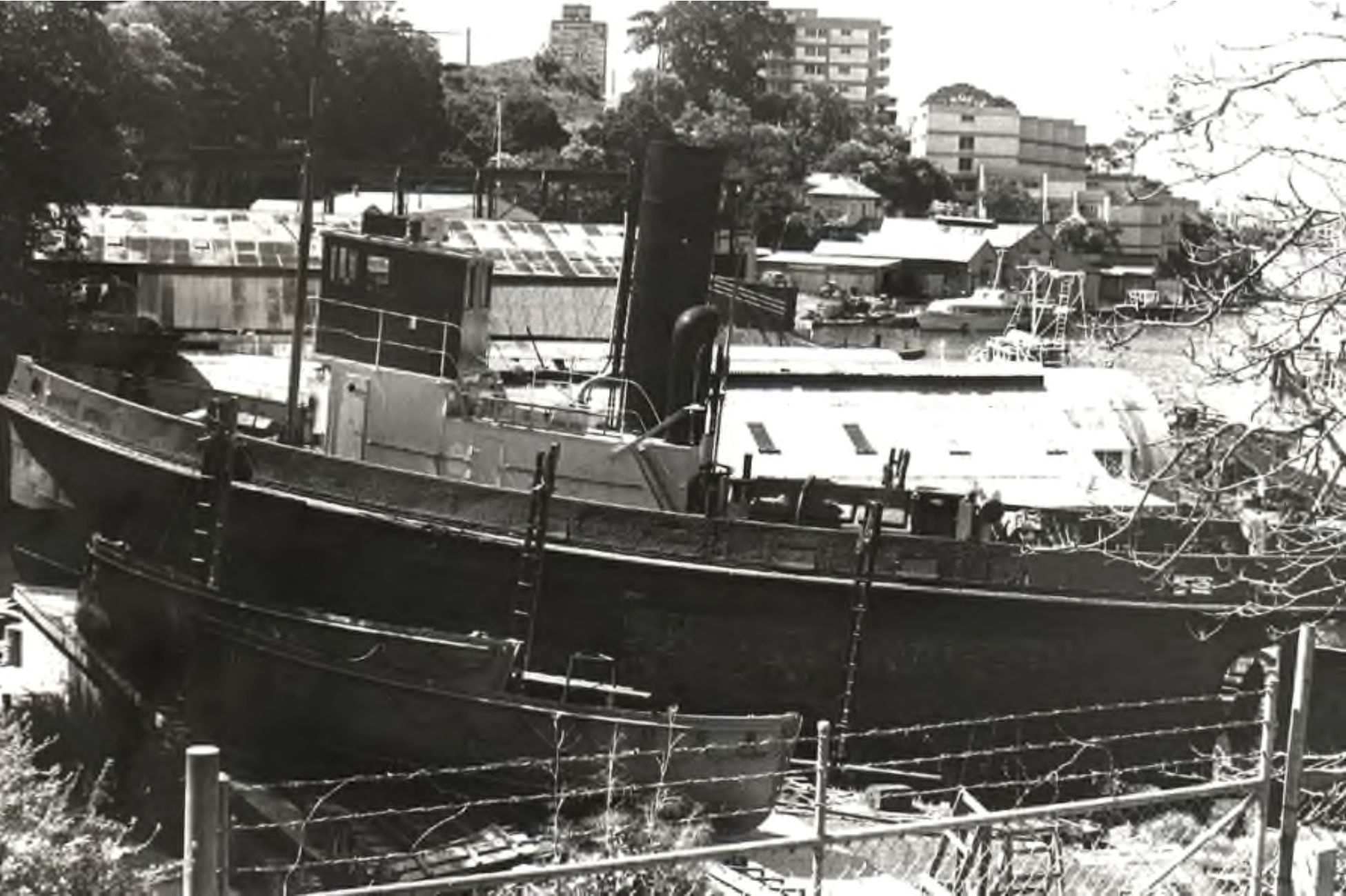 Wattle on the slip at Berry's Bay 1978, Graeme Andrews Collection
